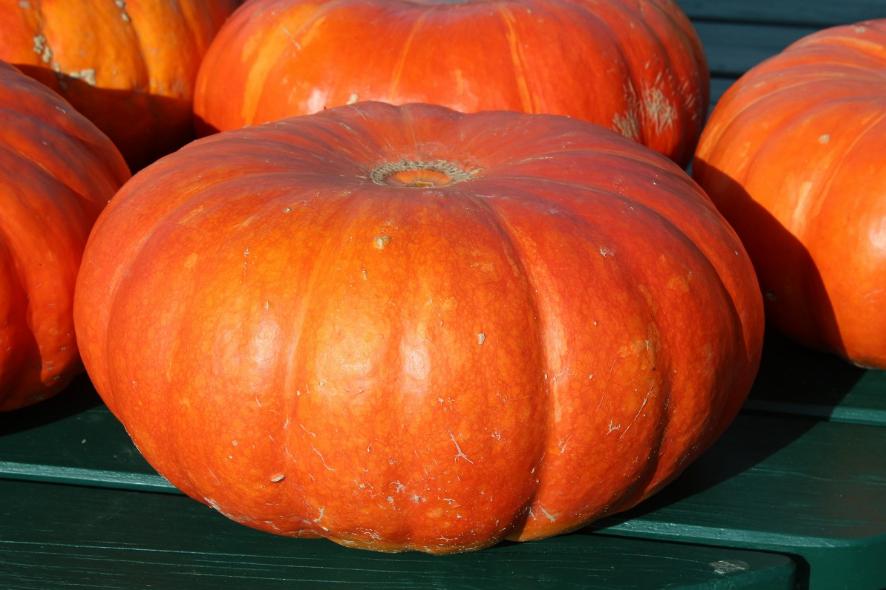 Сезонные продукты осени