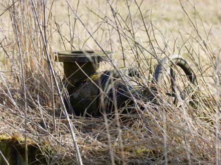 Россияне, которые не косят траву на своем участке, лишатся земли