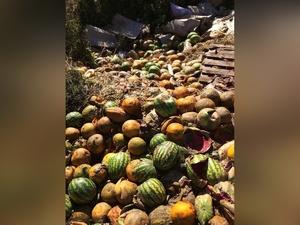 Соцсети: бахчевая свалка появилась в поселке Пыра