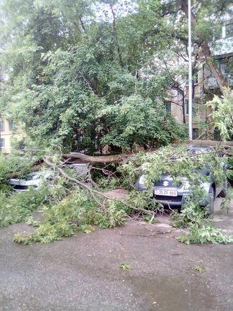 Машины завалило деревьями после урагана в Нижегородской области - фото 4