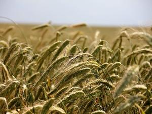140 млн рублей субсидий получили нижегородские аграрии