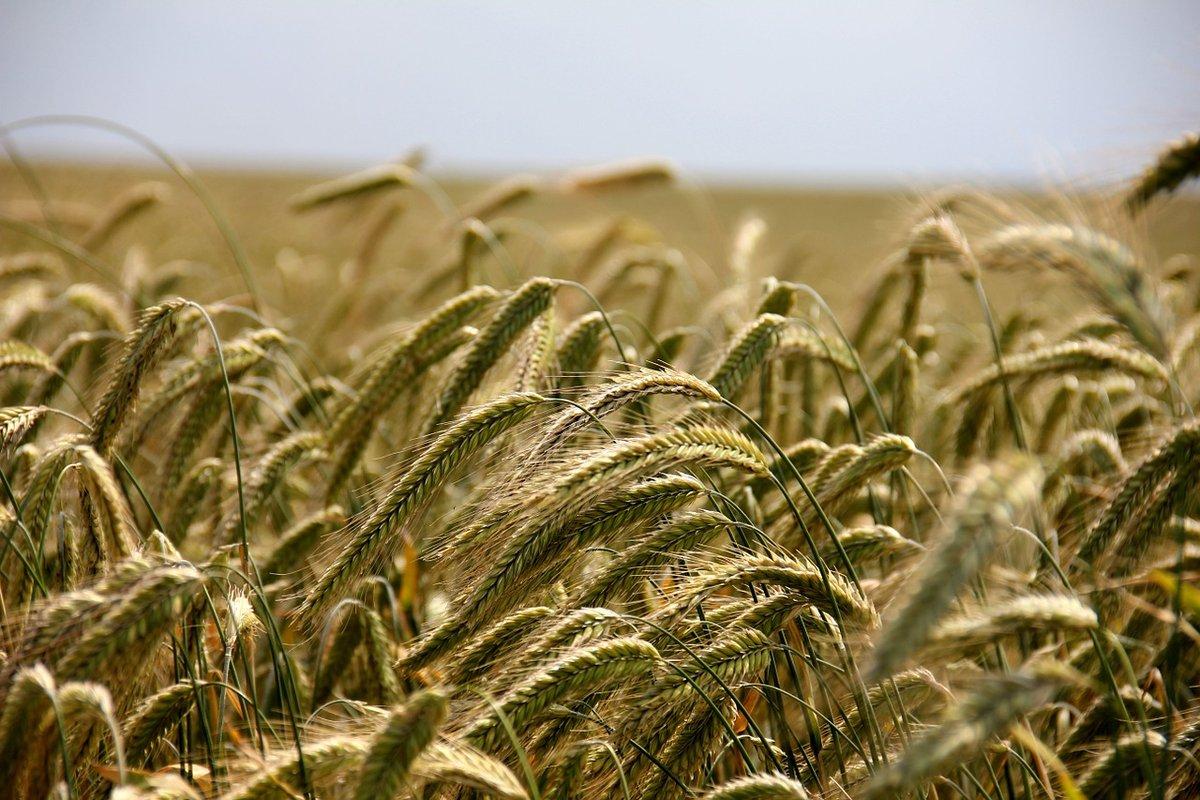 140 млн рублей субсидий получили нижегородские аграрии - фото 1