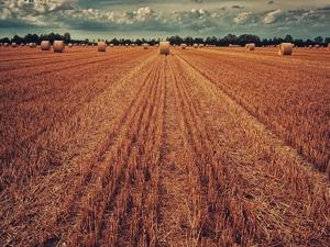 Около 1,5 млн тонн зерна собрали в Нижегородской области