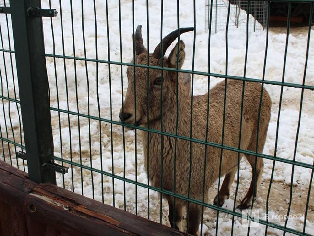 Глеб Никитин пообещал поддержать нижегородский зоопарк «Лимпопо» - фото 1