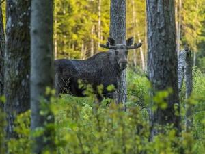 Запрет на охоту сняли в Нижегородской области