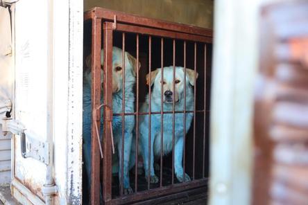 Двух синих собак приютил гараж администрации Дзержинска