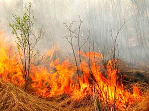 В Автозаводском районе спилили 200 деревьев во избежание распространения пожара
