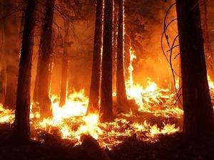 Особый противопожарный режим введен в Нижнем Новгороде