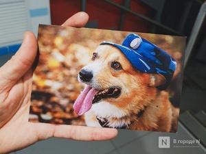 Полицейский-корги из Нижнего Новгорода шлет поздравительные открытки россиянкам