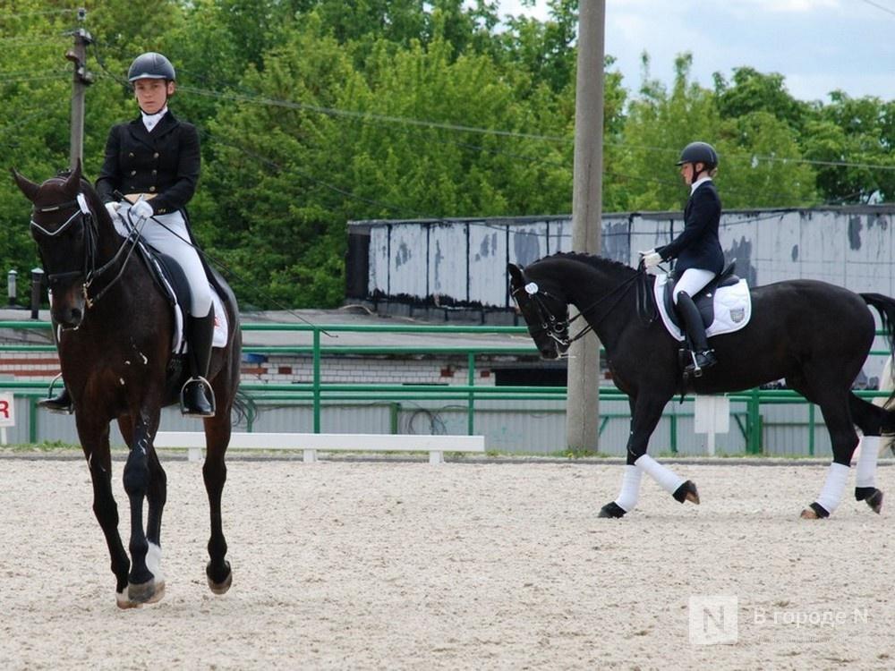 Любителей лошадей не пустят на Чемпионат России по выездке в Нижнем Новгороде - фото 1