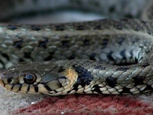 Что делать, если в лесу вас укусила ядовитая змея