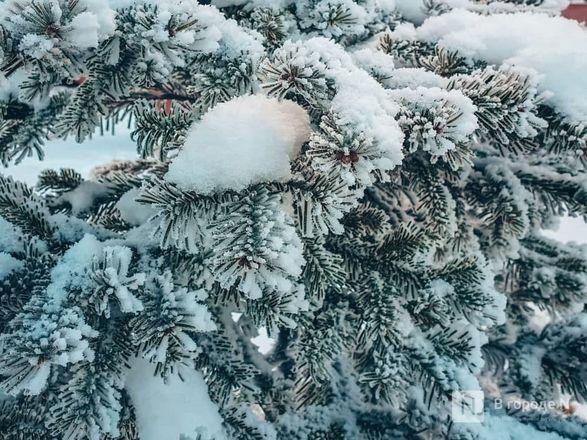 Как Нижний Новгород пережил аномально морозные дни  - фото 13